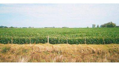 En 2016, Banco Provincia prestó más de $ 30.000 millones a la agroindustria