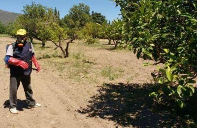 El Ministerio pulverizó los frutales de más de 21 mil domicilios en el 2016