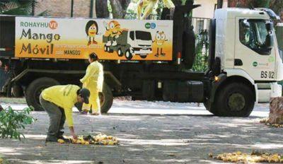 El mango: una bendición transformada en basura