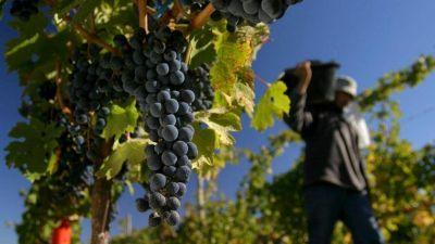 Vid: San Juan perdió el 10% de sus pequeños productores