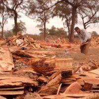 Las tierras devueltas en Salta Forestal se usarán en proyectos ganaderos
