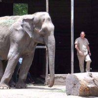 Destinarán 12 millones de pesos para transformar el zoológico en un bioparque