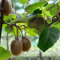 Productores marplatenses obtendrán el primer sello de calidad por frutas y hortalizas libres de residuos de agrotóxicos