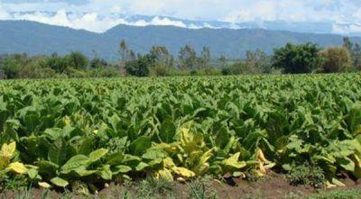 Fondo Especial del Tabaco: El gobierno asegura que aguardan el envío de dinero de la Nación