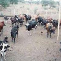 La extensa sequía pone en jaque Los Llanos riojanos