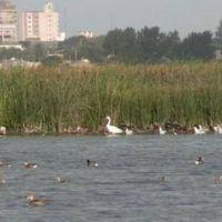 Preocupación por la situación de la laguna del basural