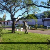 Espacios verdes: continúan los trabajos de limpieza y podas en Escobar