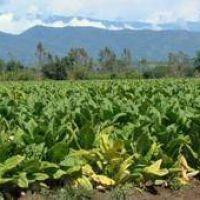Fondo del Tabaco: esperan la remisión de fondos nacionales