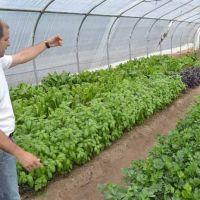 En 2017 Pro Huerta impulsará la generación de semillas locales