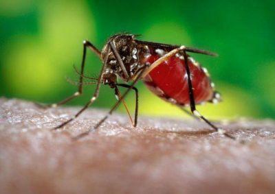 Se intensifica acciones para el control del mosquito del dengue