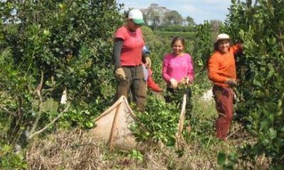Hasta fines de marzo se podrá actualizar datos de productores e inscribir yerbales