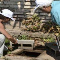 En siete barrios relevan las larvas de mosquitos
