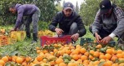 Fruticultores acuerdan 35% de aumento