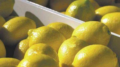 EE.UU. frenó el acuerdo para comprar limones argentinos y puso en alerta a varios sectores