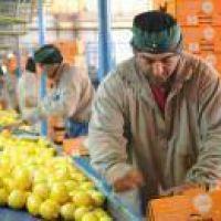 Manzur quiere el limón en los EEUU: