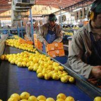 Tras la suspensión de la importación de limones a EE.UU. caen las acciones de la frutícola San Miguel