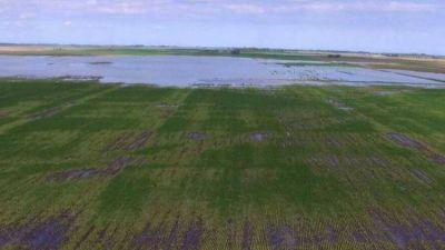 Estiman $ 375 millones de pérdidas en la cuenca lechera del nordeste de Córdoba