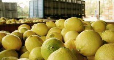 Relativizan el impacto de la suspensión de exportar limones a Estados Unidos
