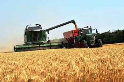 Cosecha récord de trigo en nuestra provincia