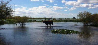 Se hacen relevamientos satelitales en Islas, Victoria y Gualeguay por posible prórroga de la emergencia agropecuaria
