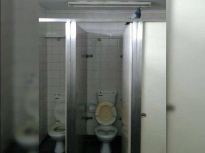 Rejas sí, baños no: Cuestionan a Vidal por no destinar fondos para reparar instalaciones del OPDS