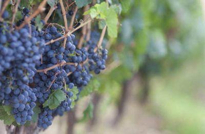 Salta si puede exportar sus vinos a Bolivia