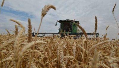 Trigo: la mejor cosecha de los últimos 50 años