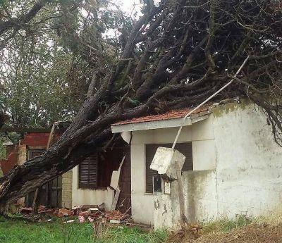 El temporal golpeó con fuerza: hay 39 evacuados, casi 200 árboles caídos y barrios sin luz