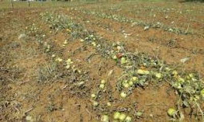 Se declaró la emergencia agropecuaria en Famatina
