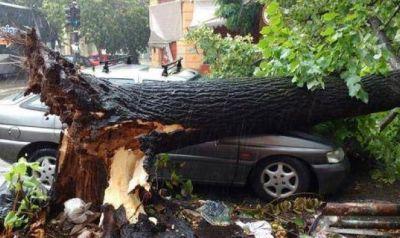 Un fuerte temporal provocó serios destrozos en La Plata