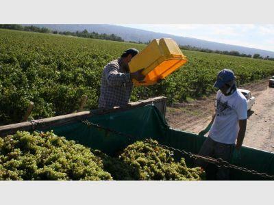 Amplían el crédito y bajan la tasa de interés para cosechar las uvas