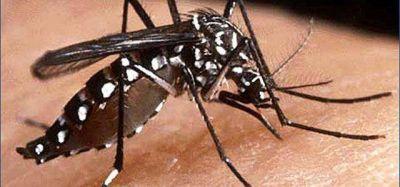 Por el momento, no se registraron casos de dengue