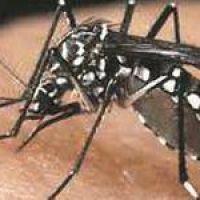 Dengue: en Formosa niegan datos sobre los casos mientras los viajantes o visitantes se contagian