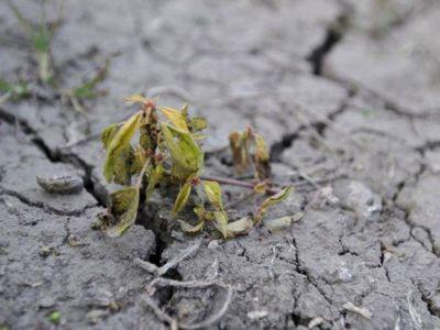 Nación declaró la emergencia agropecuaria en Salta  Campo