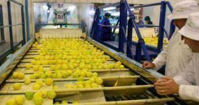 Fuerte lobby de productores en EE.UU. para que no ingresen limones de la Argentina