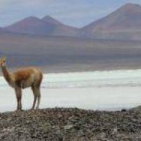 El gobierno negó que haya proyectos mineros en Laguna Brava