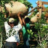 #Yerbatazo: en medio del conflicto, el INYM pidió no plantar yerba durante los próximos dos años