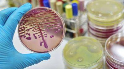 La OMS publicó una lista de bacterias resistentes a los antibióticos
