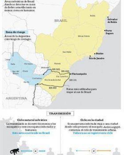Alerta por la fiebre amarilla: hay riesgo para Misiones y Corrientes