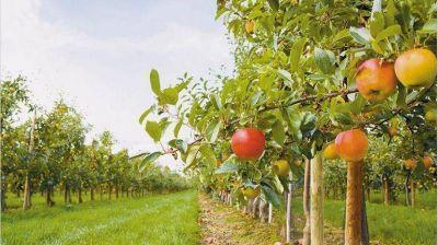 La producción de peras y manzanas fue la más baja de los últimos 10 años