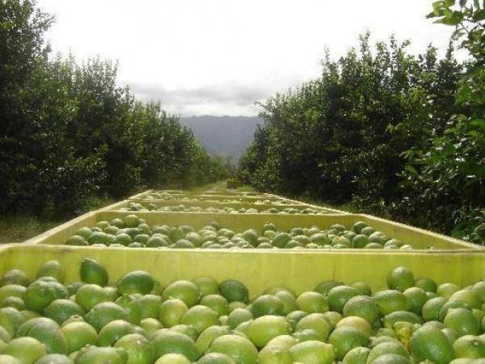 Tucumán pronto a exportar limones a México