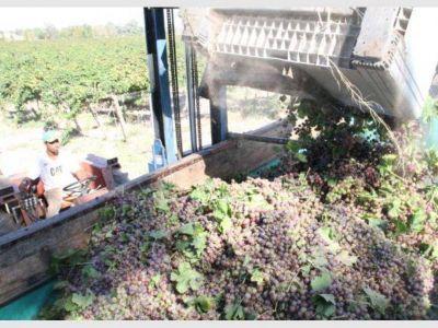 San Juan y Mendoza deberán destinar a mosto el 13% de las uvas