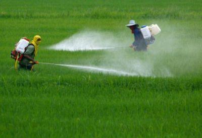 Denuncian que Monsanto manipuló estudios sobre el Glisfofato