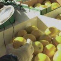 EE.UU. extiende por otros 30 días la suspensión al ingreso de limones argentinos