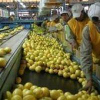 El gobierno aclaró que la restricción al limón no afectará la economía