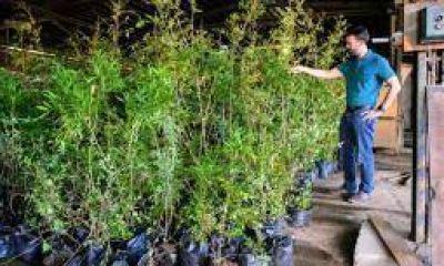 Llegó donación de 1.000 árboles para forestar Capital