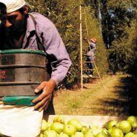 Fuerte descenso en la producción y crisis en el sector frutícola