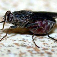 Crecen las quejas por la presencia de moscas y mosquitos en la ciudad