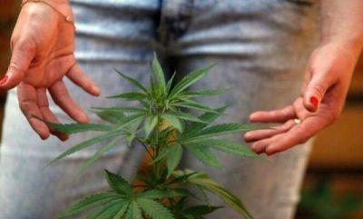 El debate por el uso del aceite de cannabis con fines medicinales llegó a Pilar
