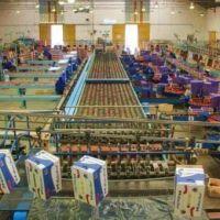 Crisis frutícola: Cierra otra empresa y hay 30 despidos